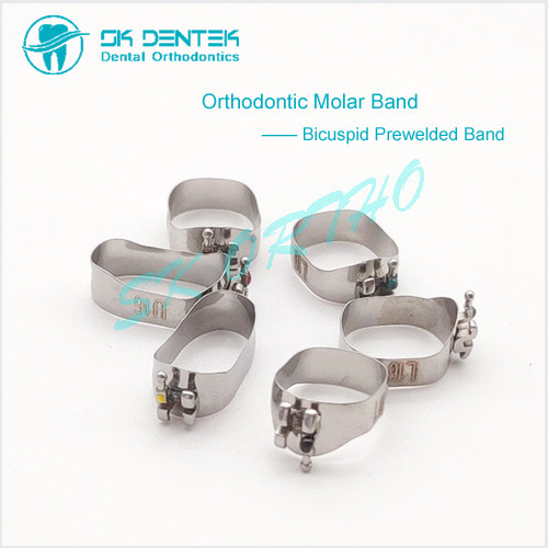 Orthodontic Bicuspid Band