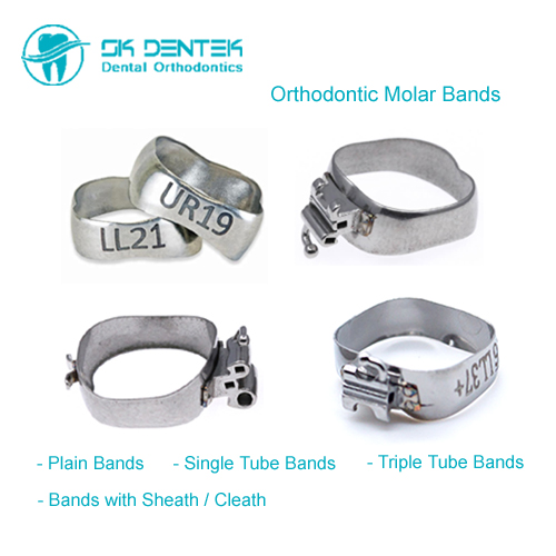 Orthodontic Molar Band Series